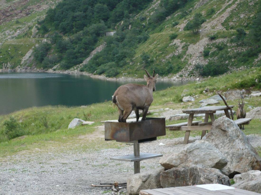 Lago della rovina for Planimetrie della cabina del lago